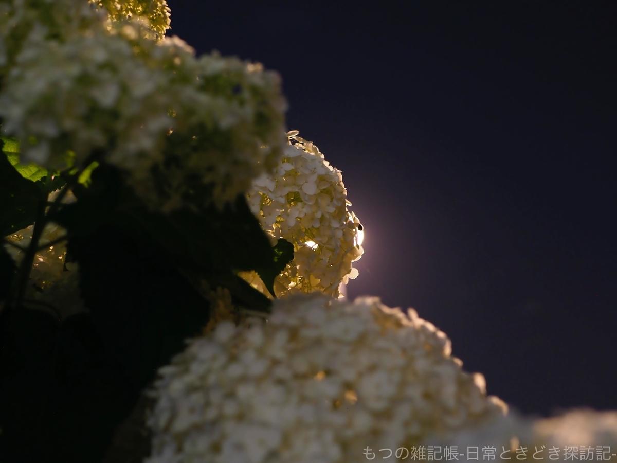 f:id:exceed-yukikaze:20200618210436j:plain