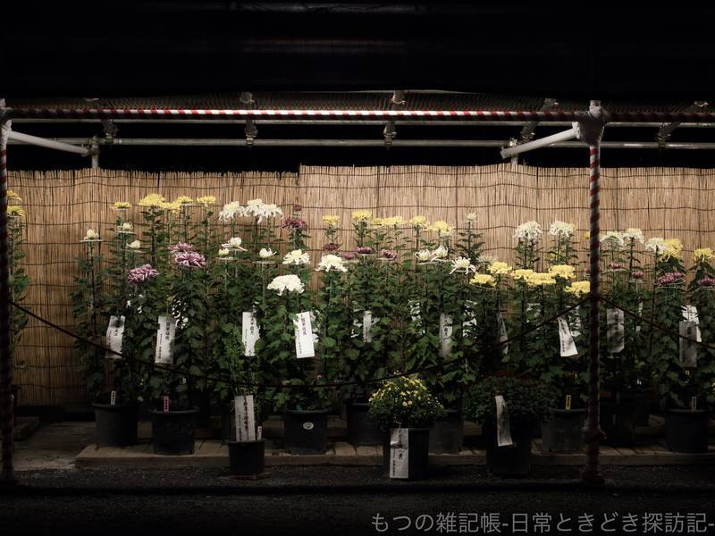 f:id:exceed-yukikaze:20201031220745j:plain