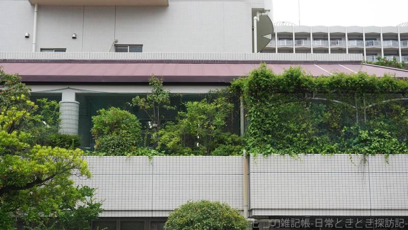 f:id:exceed-yukikaze:20210626215623j:plain
