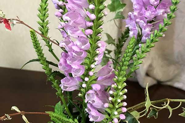 ウェディングからガーデニングまで活用できる、花や植物の色とイメージ@福岡
