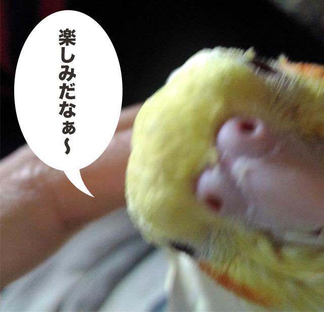 f:id:ezoushimemo:20180617204752j:plain
