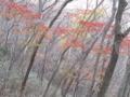 雲母峰紅葉