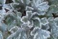 大地が暖まって虫が這い出てくるはずが・・・霜