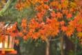 『京都新聞写真コンテスト 大原野神社の紅葉』