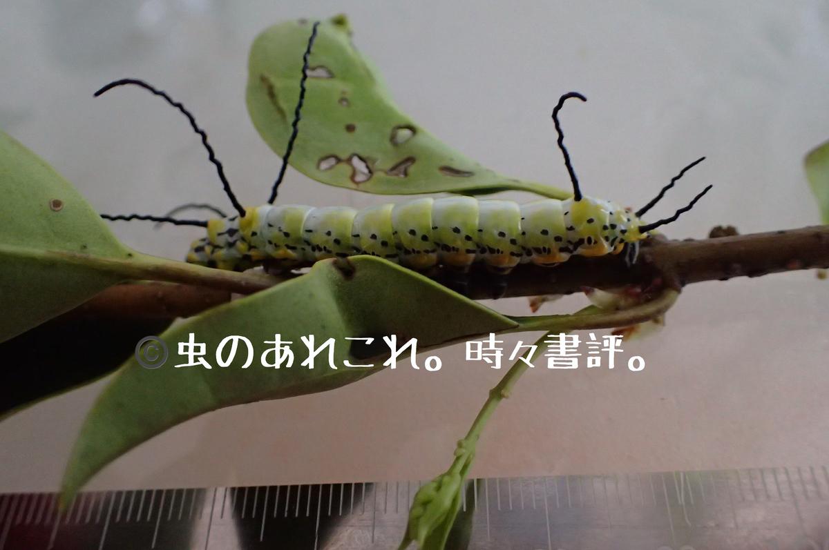 f:id:fabreimomushi:20190412185448j:plain