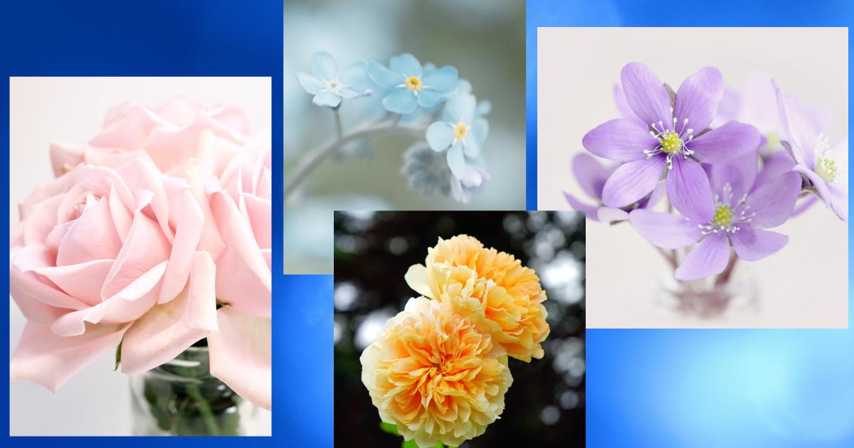 f:id:fairysgarden:20210320061721p:plain