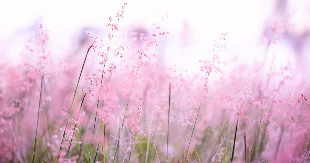 f:id:fairysgarden:20211021205243p:plain