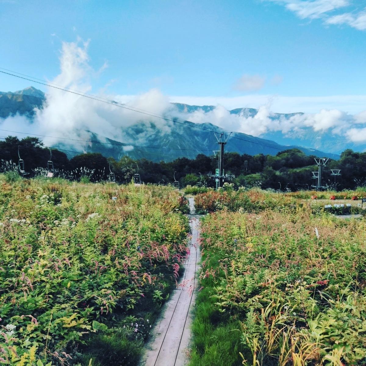 9月の白馬五竜高山植物園