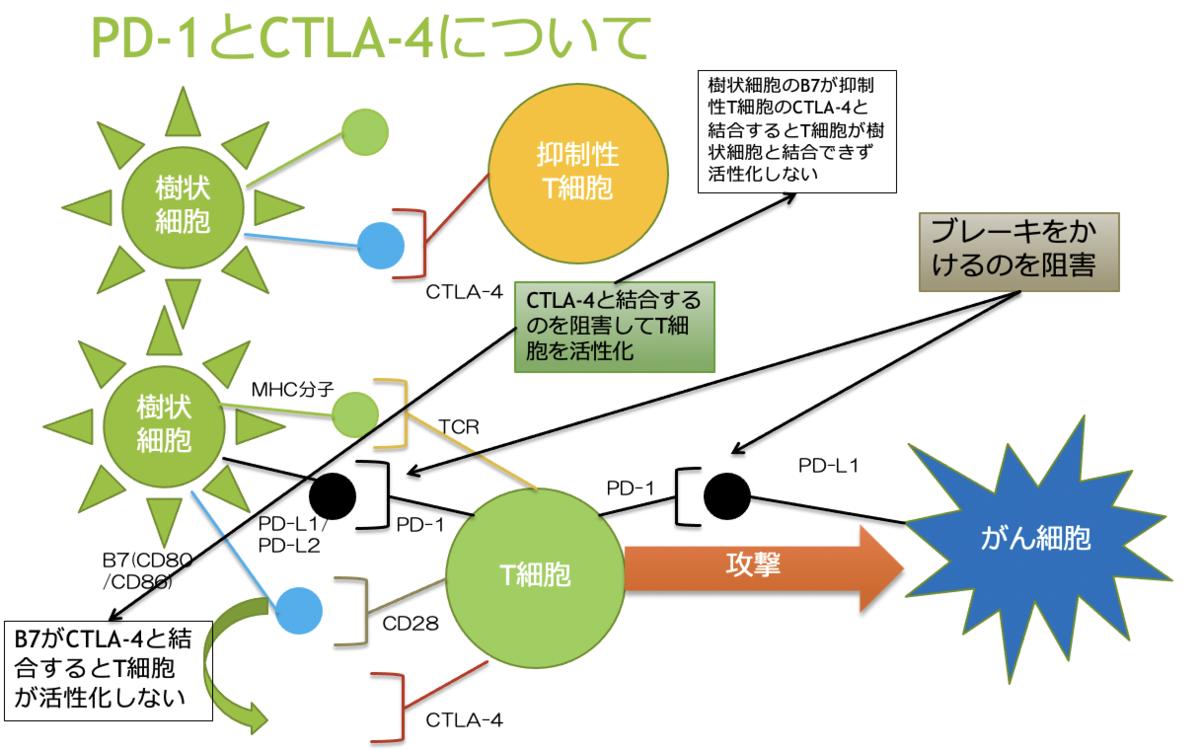 f:id:family-doctor-shin:20201118002927p:plain