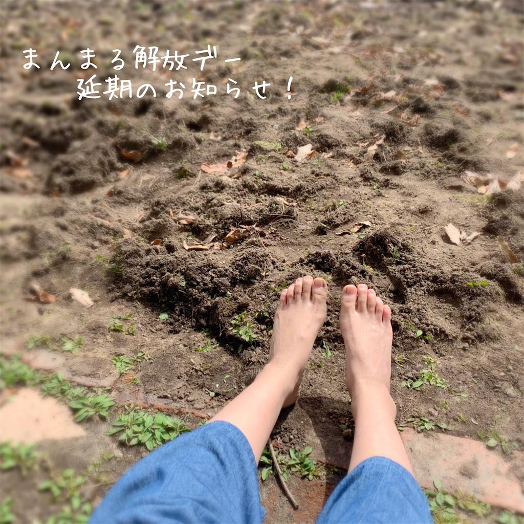 f:id:family_yaaninju_miyagi:20210430115756j:image