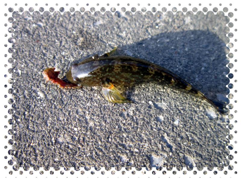 f:id:familyfishing:20140429105521j:plain