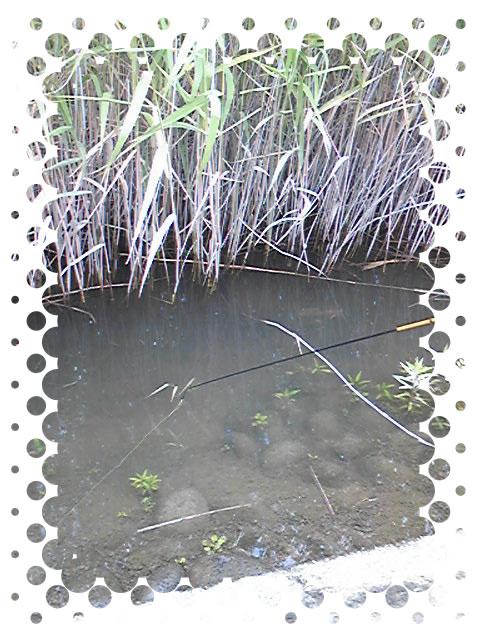 立田大橋での手長エビの釣りポイント