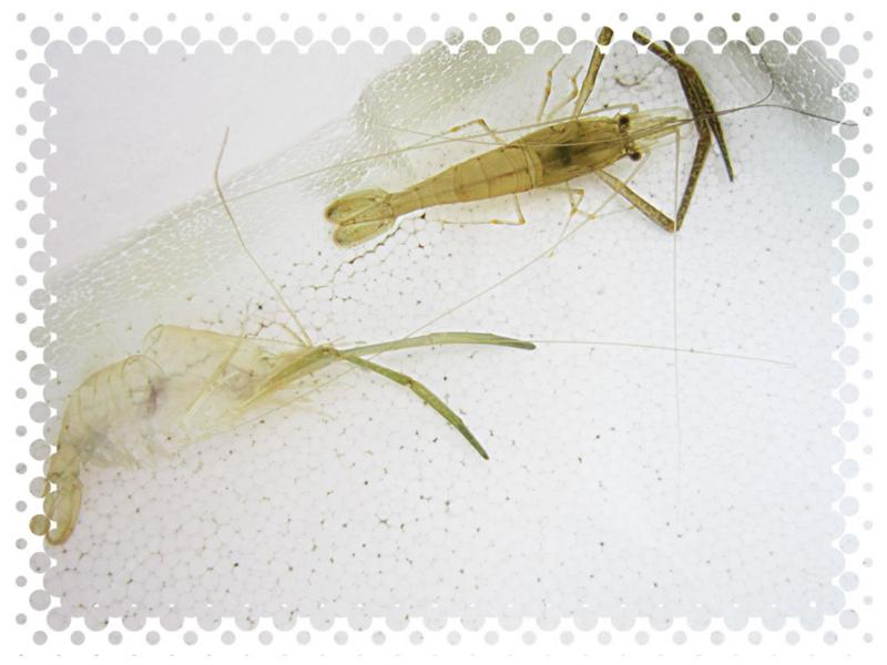 f:id:familyfishing:20140712080623j:plain
