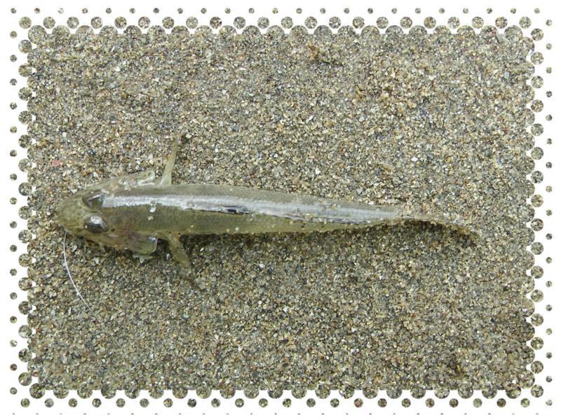 f:id:familyfishing:20140727224313j:plain