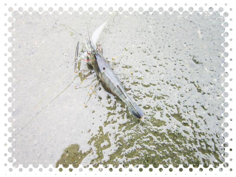 f:id:familyfishing:20150714222932j:plain