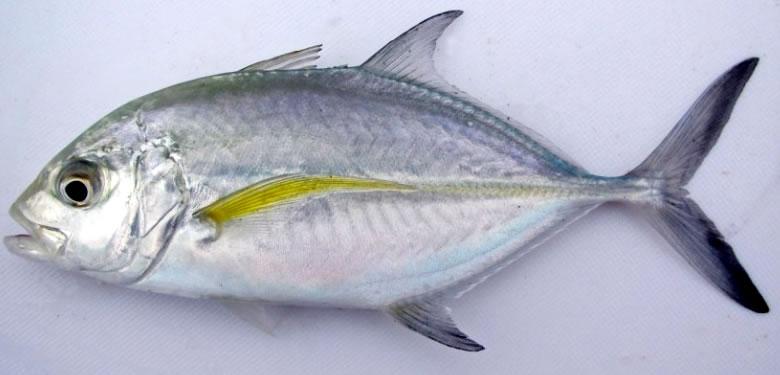 f:id:familyfishing:20150724003150j:plain