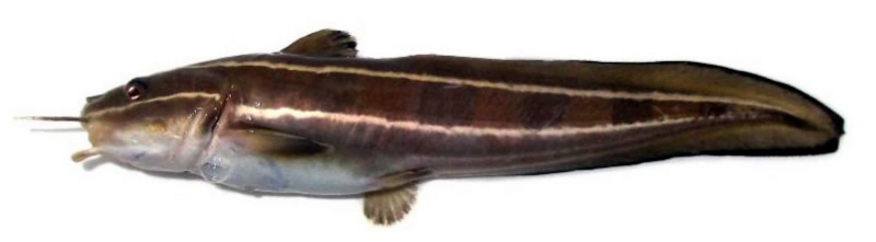 f:id:familyfishing:20150724003152j:plain
