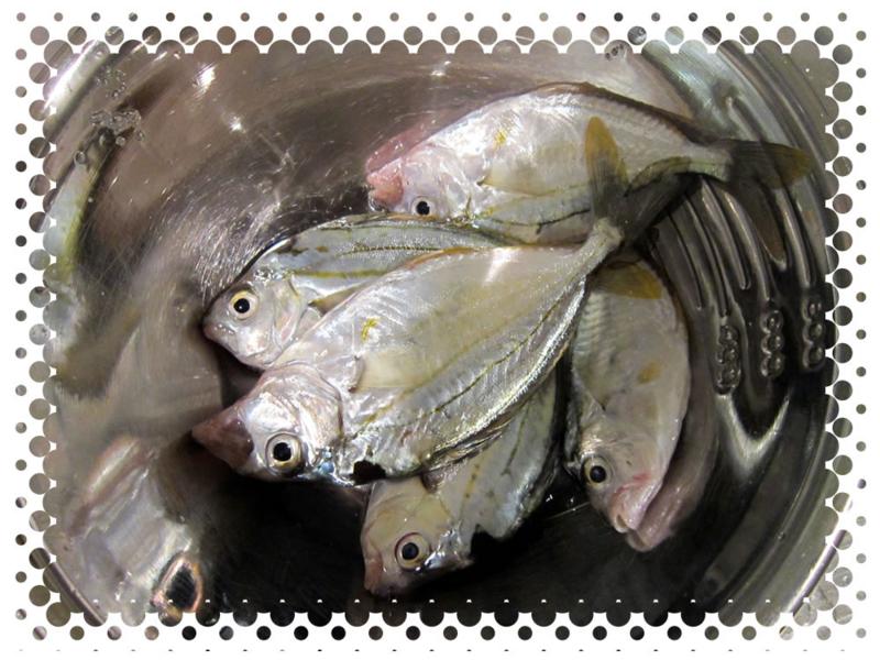 f:id:familyfishing:20150923215208j:plain