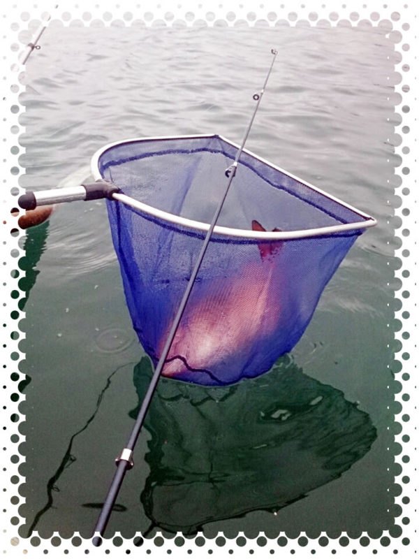 f:id:familyfishing:20151225204418j:plain