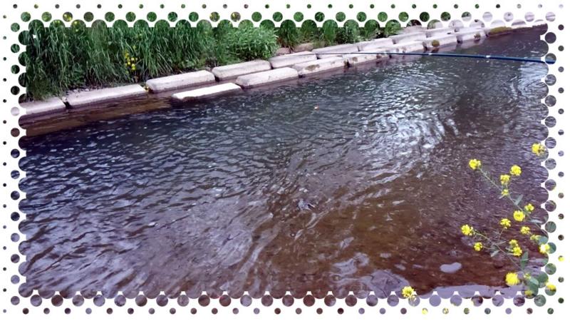 f:id:familyfishing:20160424082310j:plain