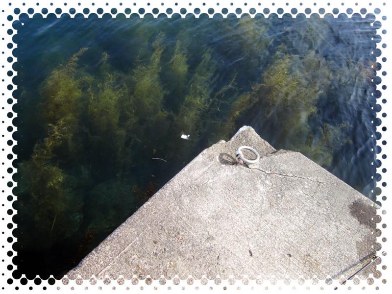 f:id:familyfishing:20160516205411j:plain