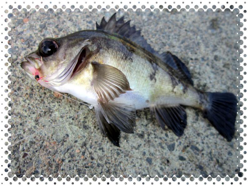 f:id:familyfishing:20160529210940j:plain