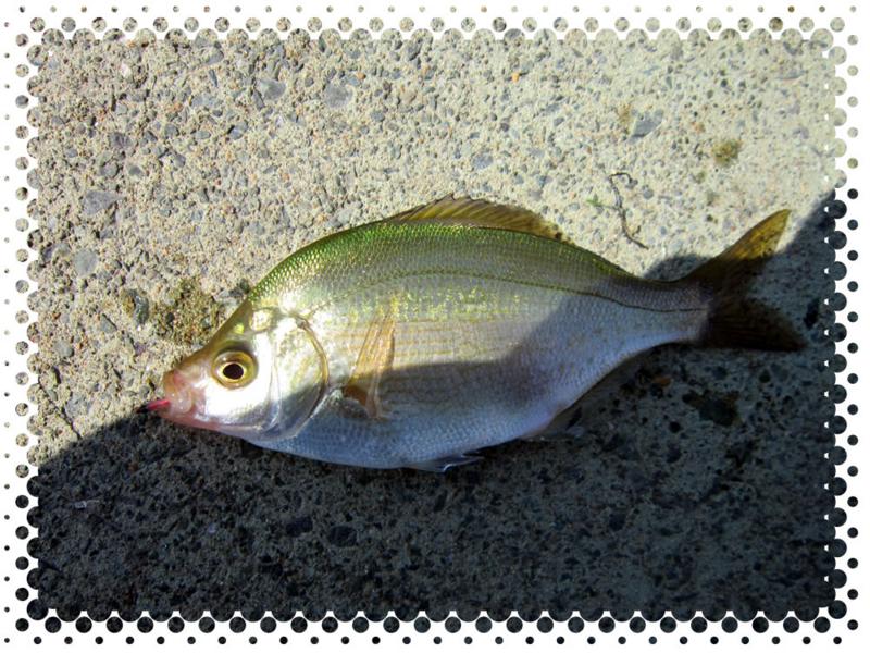 f:id:familyfishing:20160529210942j:plain