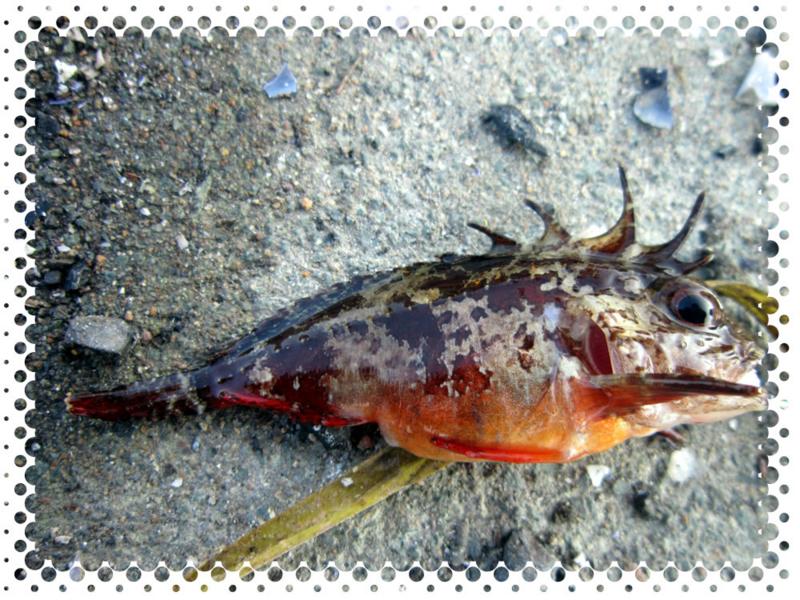 f:id:familyfishing:20160529210946j:plain