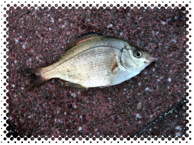 f:id:familyfishing:20160529210954j:plain