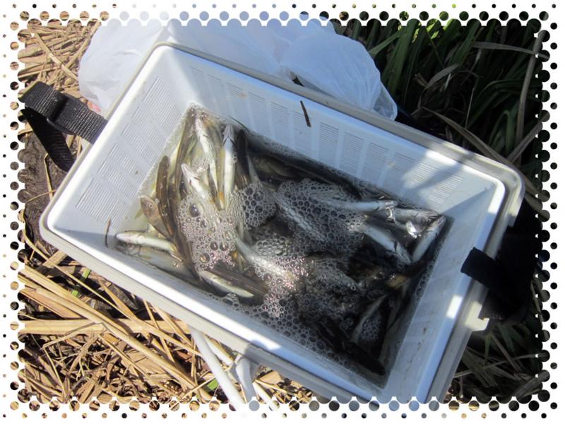f:id:familyfishing:20160708081626j:plain
