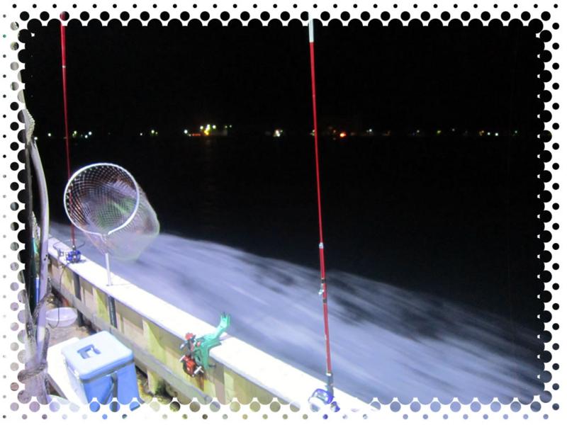 f:id:familyfishing:20160709152514j:plain
