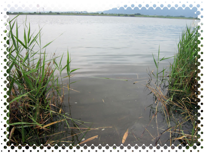 f:id:familyfishing:20160725234214j:plain