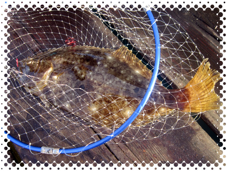 f:id:familyfishing:20160801231604j:plain