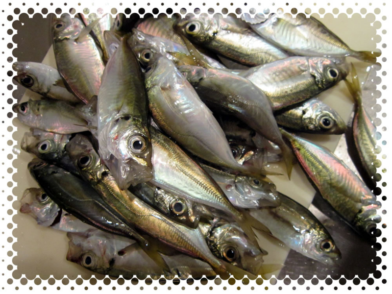 f:id:familyfishing:20160815235355j:plain