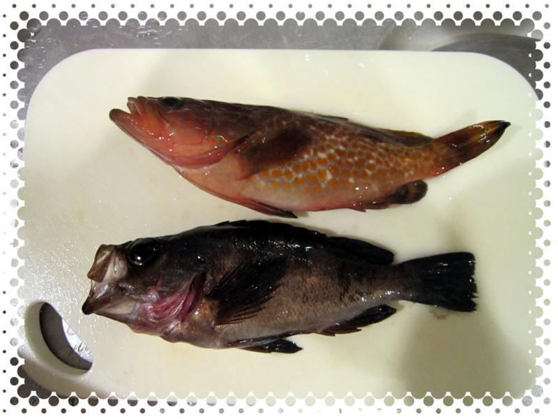 f:id:familyfishing:20160815235359j:plain