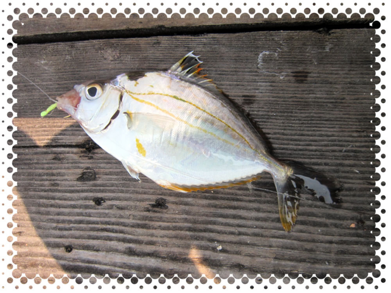 f:id:familyfishing:20160815235400j:plain