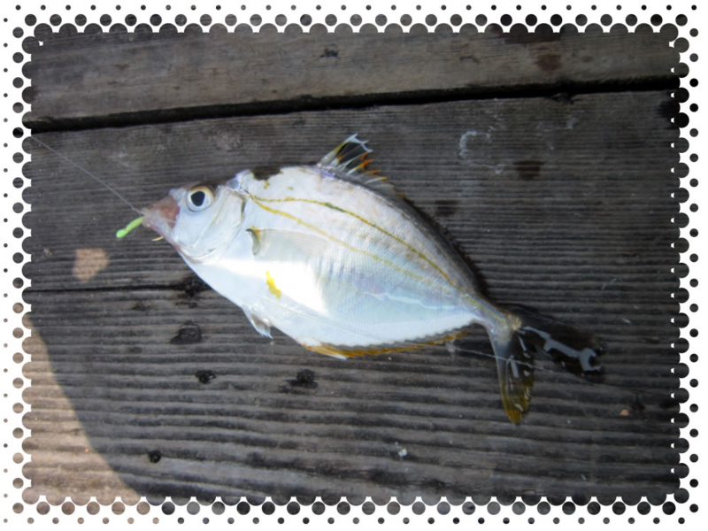 f:id:familyfishing:20160815235401j:plain