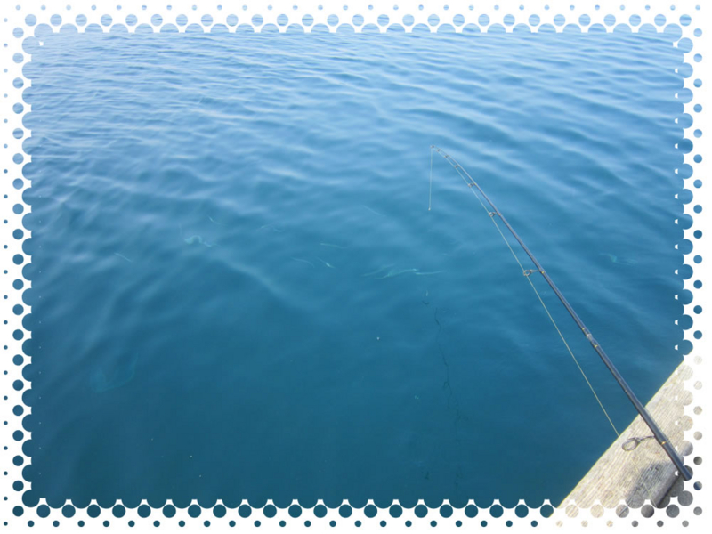 f:id:familyfishing:20160815235403j:plain