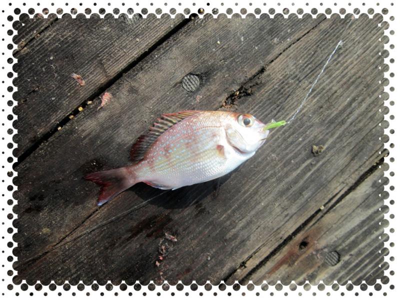 f:id:familyfishing:20160815235406j:plain