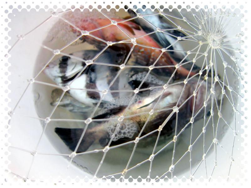 f:id:familyfishing:20160815235412j:plain