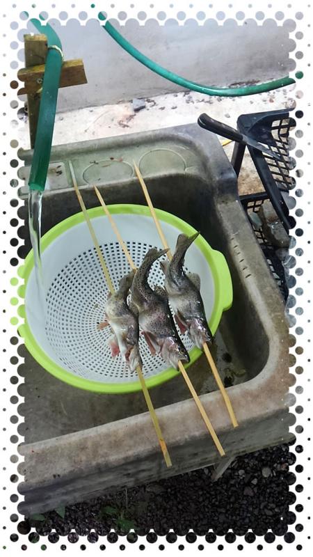 f:id:familyfishing:20160821235508j:plain