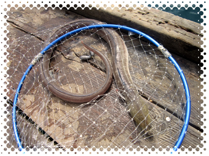 f:id:familyfishing:20160911214826j:plain