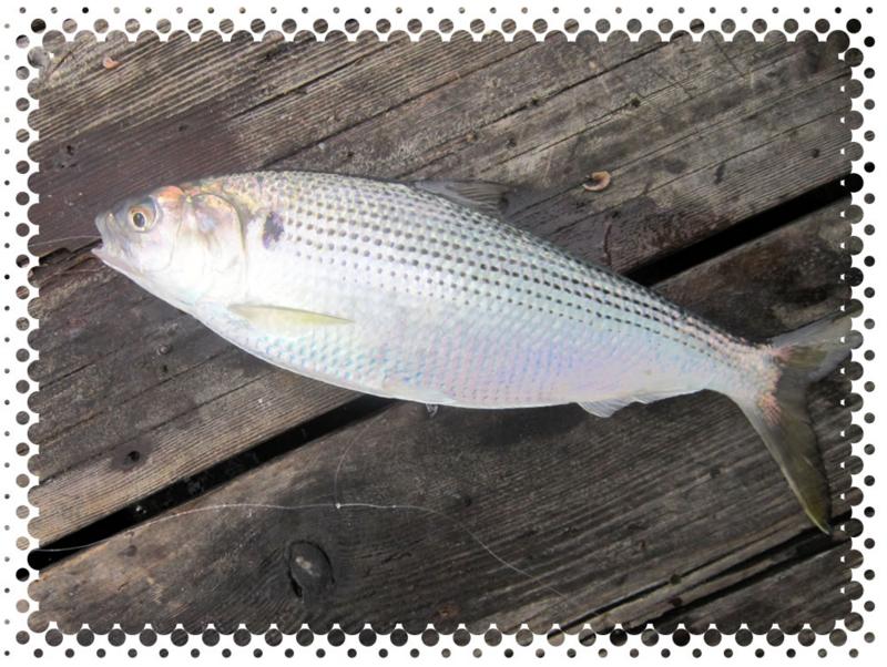 f:id:familyfishing:20160911214830j:plain