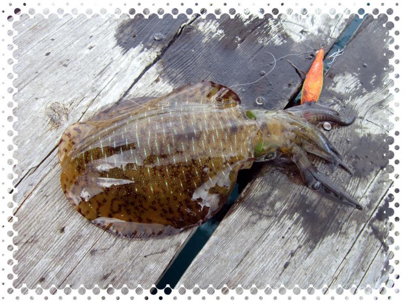 f:id:familyfishing:20160911214831j:plain