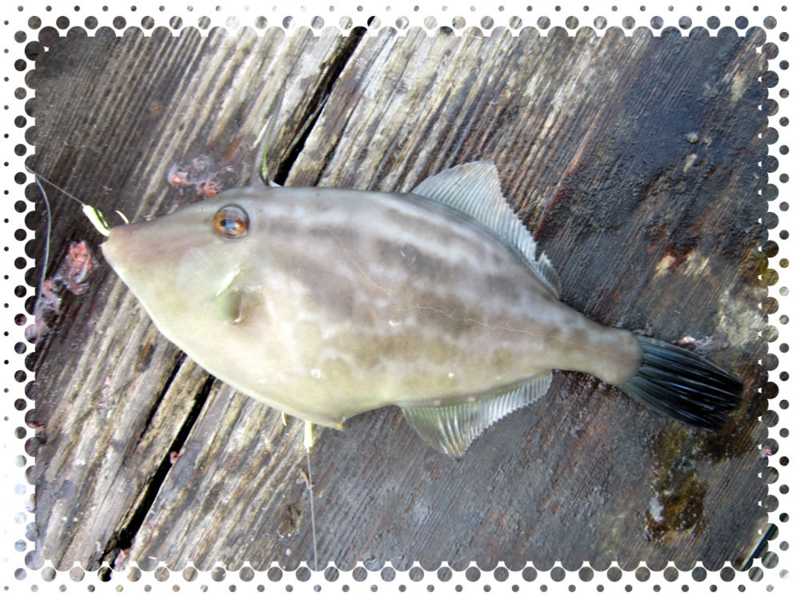 f:id:familyfishing:20160911214833j:plain