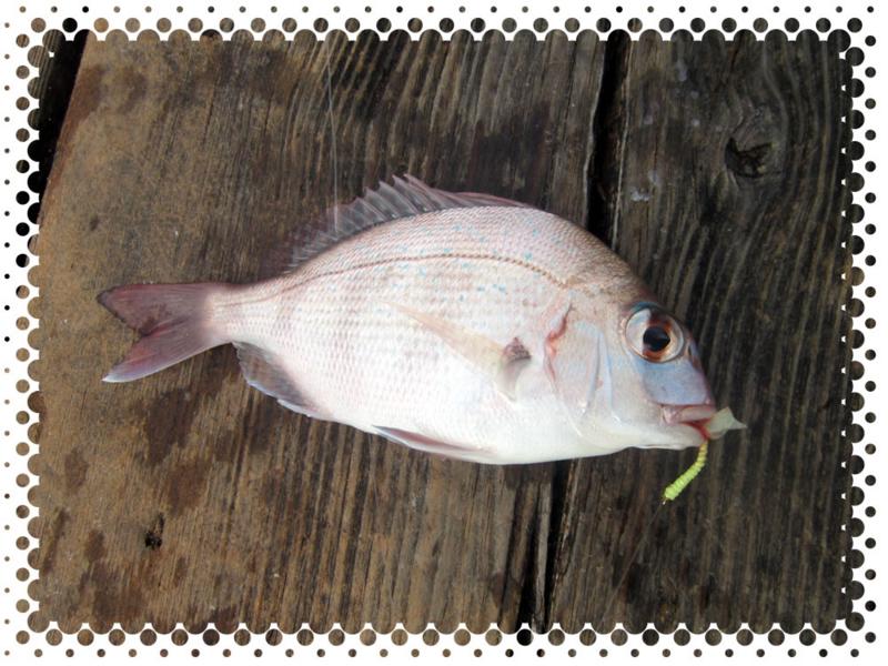 f:id:familyfishing:20160911214834j:plain