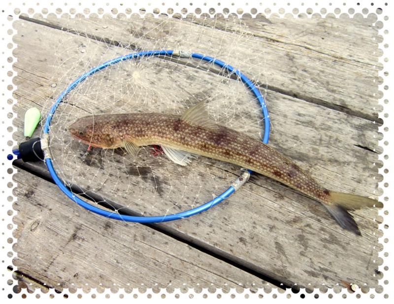 f:id:familyfishing:20160911214836j:plain