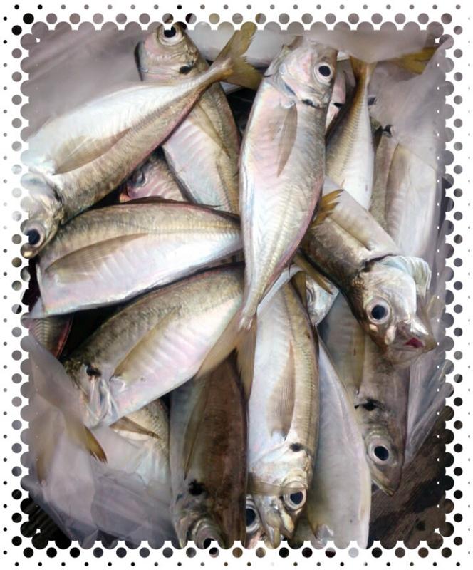 f:id:familyfishing:20160911214841j:plain