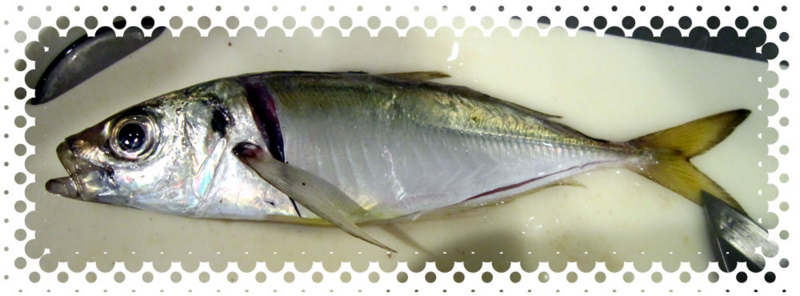 f:id:familyfishing:20160919095901j:plain