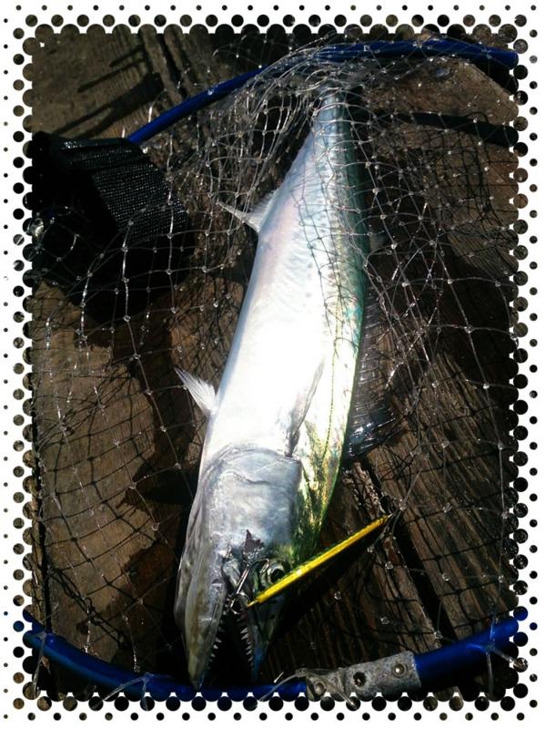 f:id:familyfishing:20161004070925j:plain